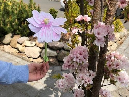 Frühlingsblüten_1