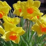 Frühlingserwachen_3